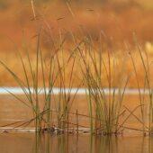Lodówka, Long-tailed Duck, Clangula hyemalis, Przeczyce, SLK, 15.11.2020 (Polska, Poland) (1)